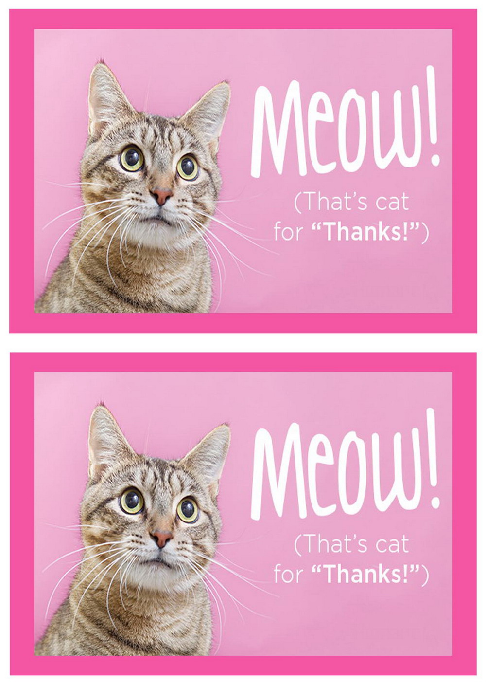 Cat Lovers Thank you Cards Birthday