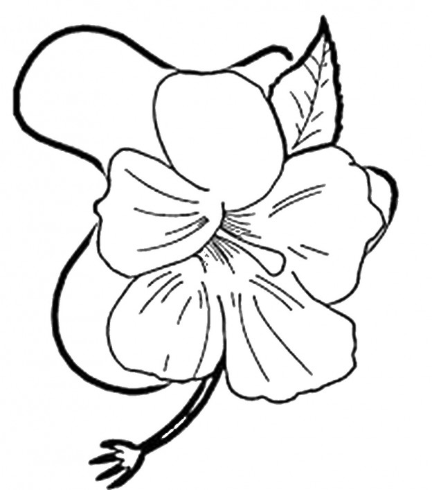 Birthday Printable | Luau Coloring Pages