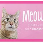 Cat Lovers Thank you Cards